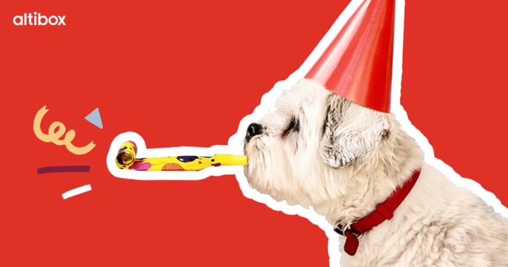 hund som feirer med partyhatt og festfløyte